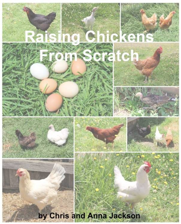 """Raising Chickens From Scratch"""